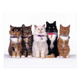 crazy cat lady cats postcard