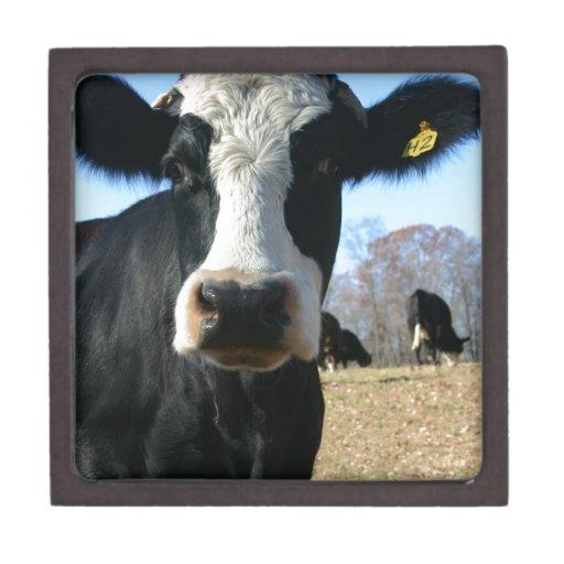 Crazy Cow Premium Keepsake Box