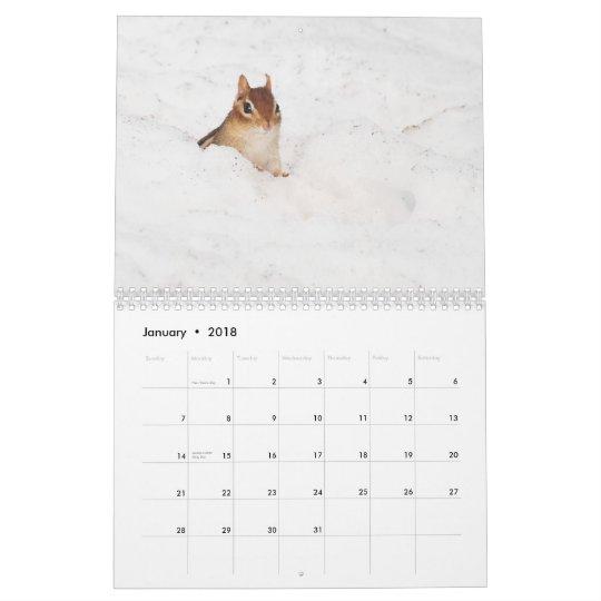 Crazy Cute Chipmunks 2011 Calendar