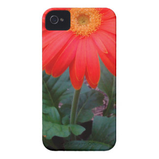 Crazy Daisy iPhone 4 Case