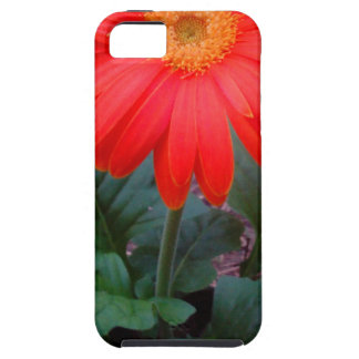 Crazy Daisy iPhone SE/5/5s Case