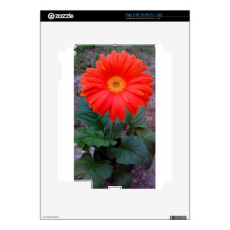 Crazy Daisy Skins For The iPad 2