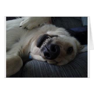 CRAZY DOG CARD
