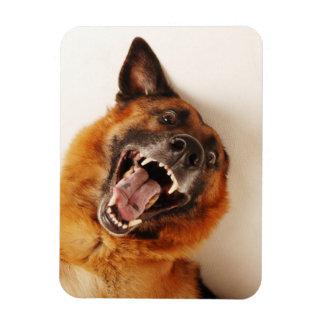 Crazy funny dog magnet