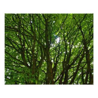Crazy Green Tree Photo