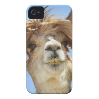 Crazy Hair Alpaca Case-Mate iPhone 4 Case