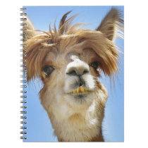 Crazy Hair Alpaca Spiral Notebook