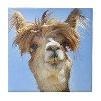 Crazy Hair Alpaca Tile