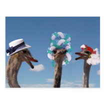 Crazy Hat Day at the Races Postcard