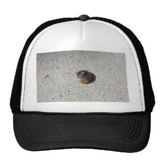 Crazy Snail Hat