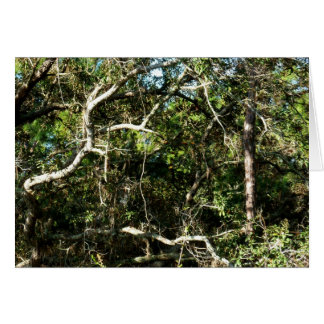 crazy tree limbs nature photo image stationery note card
