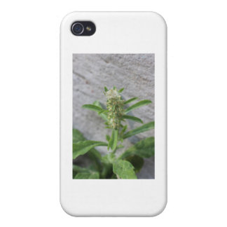 Crazy Weed Plant iPhone 4 Cases