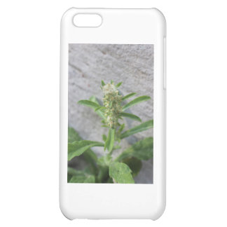 Crazy Weed Plant iPhone 5C Covers