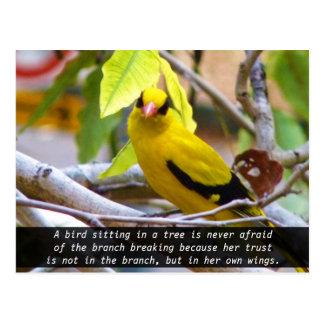 Crea en sí mismo, pájaro amarillo encaramado en ra tarjetas postales