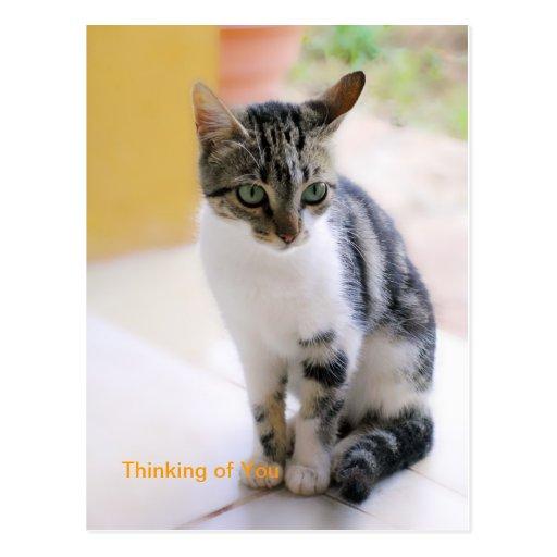 Creaciones del gatito que piensan en usted postal
