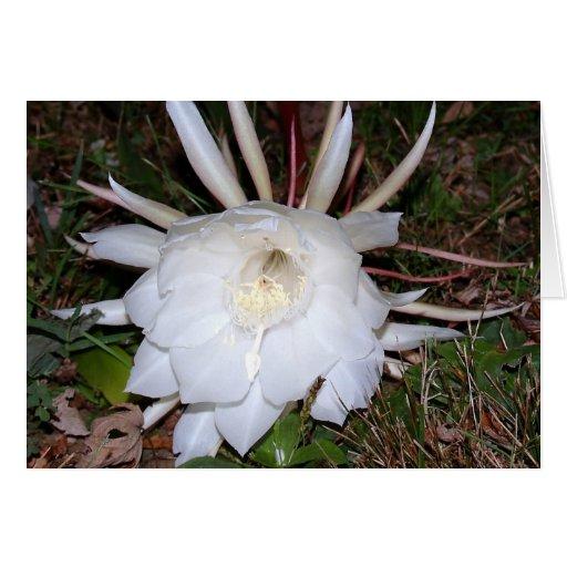 creaciones florales tarjeta de felicitación