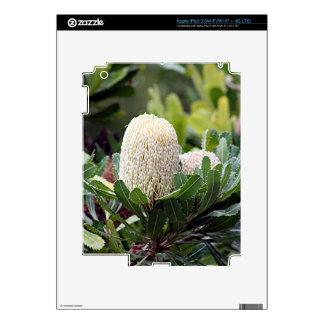 Cream Australian banksia flower iPad 3 Decals