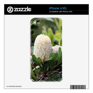 Cream Australian banksia flower iPhone 4S Skins