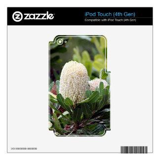 Cream Australian banksia flower iPod Touch 4G Skins