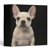 Cream colored French Bulldog puppy 3 Ring Binder