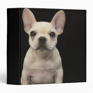 Cream colored French Bulldog puppy 3 Ring Binder