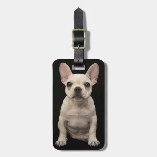 Cream colored French Bulldog puppy Bag Tags