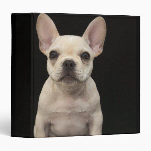 Cream colored French Bulldog puppy Vinyl Binder