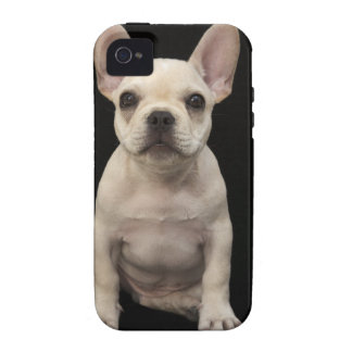 Cream colored French Bulldog puppy Case-Mate iPhone 4 Cases