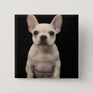 Cream colored French Bulldog puppy Pinback Button