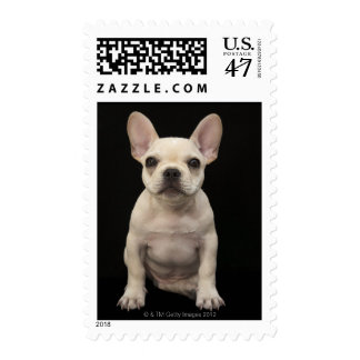 Cream colored French Bulldog puppy Postage