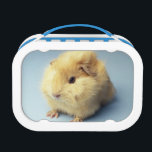 "Cream colored Guinea pig Lunch Box<br><div class=""desc"">Cream colored Guinea pig | GK Hart/Vikki Hart | AssetID: 200396892-001</div>"