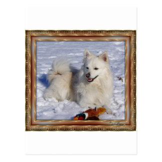 Cream Eskimo in  Circ Frame Postcard