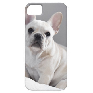 Cream Frenchie iPhone SE/5/5s Case