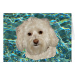 Cream Havanese with Turquoise Water Greeting Card