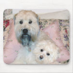 Cream Havanese with Wheaten Terrier Mouse Pad