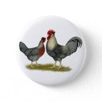 Cream Legbar Chickens Button