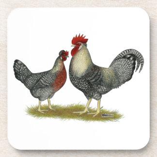 Cream, Legbar Chickens Coaster