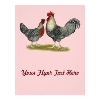 Cream Legbar Chickens Flyer