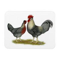Cream Legbar Chickens Magnet
