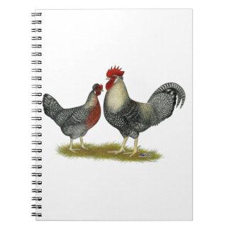 Cream Legbar Chickens Notebook
