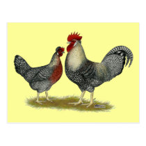 Cream Legbar Chickens Postcard