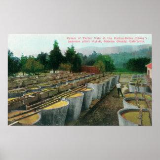Cream of Tartar Vats View at Italian-Swiss Colon Poster