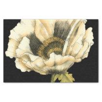Cream Poppy Flower on Black Background Tissue Paper