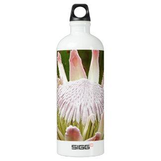 Cream Protea flower in bloom Aluminum Water Bottle