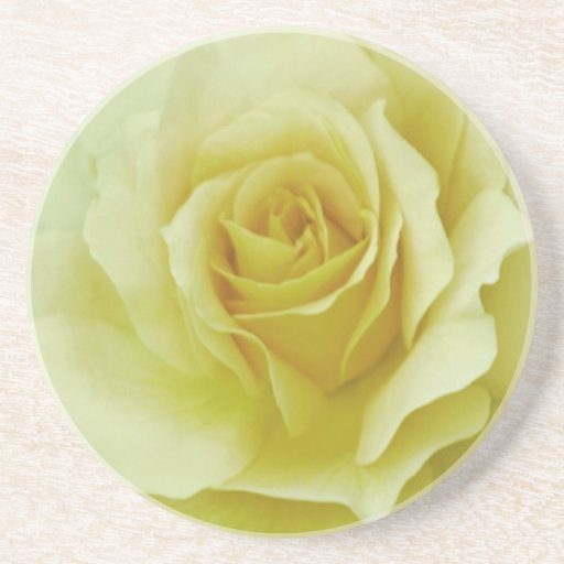 Cream Rose and meaning Beverage Coaster