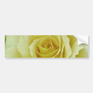 Cream Rose and meaning Bumper Sticker