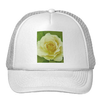 Cream Rose and meaning Mesh Hats