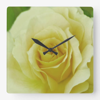 Cream Rose and meaning Square Wall Clock