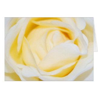 Cream Rose Floral Fine Art Photograph Card