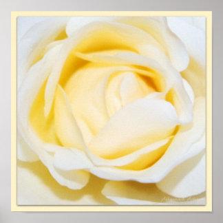 Cream Rose Floral Fine Art Photography Print